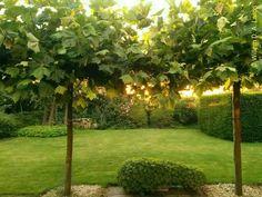 Ondergaande zon in mijn tuin. Wat een heerlijk moment in de serre met strijkkwartet 8 van Shostakovich op Radio 4.