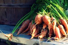 https://flic.kr/p/6C8J33 | 16 | carrots.