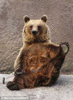 Yoga Bear (3 0f 5)