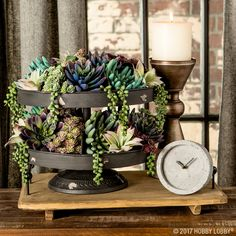 Layer succulent picks in a tiered tray for an elegant and modern display!