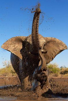 amor a los elefantes