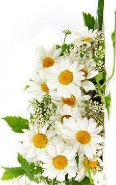 Gotta love daisies!