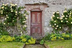 Jane Austen art photograph, door photo, old red English cottage door with yellow roses, cottage home decor artwork. Free US shipping. on Etsy, $20.00