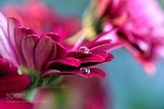 Good Morning! by tustin_shooter #nature #photooftheday #amazing #picoftheday
