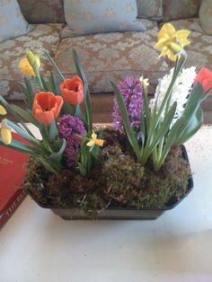 Potted plants with moss cover