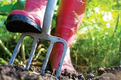 With the arrival of cold weather, it's the perfect time of year to improve vegetable garden soil.
