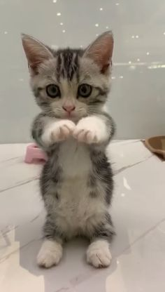 This kitty is so adorable. - Tierbilder - - Nice Katzen - This kitty is so adorable. - Tierbilder - This kitty is so adorable. Cute Baby Cats, Cute Little Animals, Cute Cats And Kittens, Cute Funny Animals, Kittens Cutest, Cute Dogs, Cute Babies, Funny Kittens, White Kittens