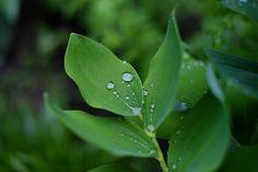 8 подписчиков, 37 подписок, 42 публикаций — посмотрите в Instagram фото и видео Super Natural Photographer (@nature.of.capture)