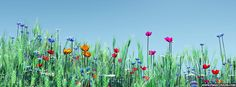 Spring Flowers Sunny Day Facebook Cover
