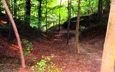Sunny Autumn Cannerberg walk