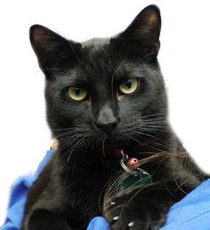 steve buzz: Athena - North Shore Animal League - please adopt me!