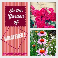 In the Garden of Whatever - The garden, as it really is - you know you know what I'm sayin' - www.homesteadlady.com