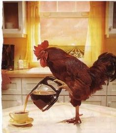 Now we know what makes the rooster an early riser! #Coffee #MrCoffee