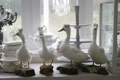 birds on parade-with crowns!  where DO people come up with some of these idea's ?.Don't you just wonder