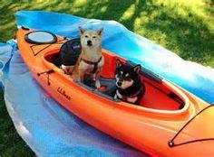 Shiba's in Kayak