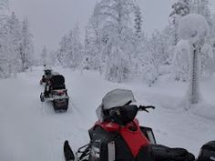 Cold, snow and forest in Lapland