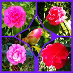 During my walk today Stuffed Peppers, Vegetables, Rose, Flowers, Plants, Pink, Stuffed Pepper, Vegetable Recipes, Florals