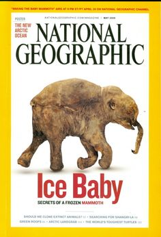 2009 National Geographic Magazine: Ice Baby - Secrets of Frozen Mammoth Cover National Geographic Cover, National Geographic Photography, National Geographic Channel, Chris John, Vanity Fair Magazine, Newspaper Cover, Ice Ice Baby, Book Lovers, The Secret