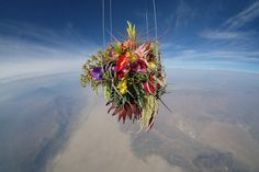 """The entire project was documented, revealing some surreal photographs of plants floating above planet earth. """"The best thing about this project is that space is so foreign to most of us,"""" says John Powell of JP Aerospace. """"So seeing a familiar object like a bouquet of flowers flying above Earth domesticates space, and the idea of traveling into it."""""""