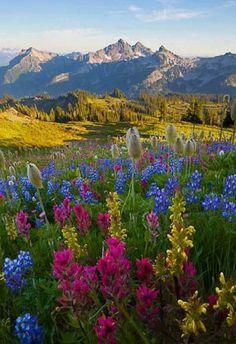 Mount Rainer National Park, WA