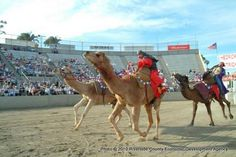Riverside County Fair & National Date Festival in Indio, CA.