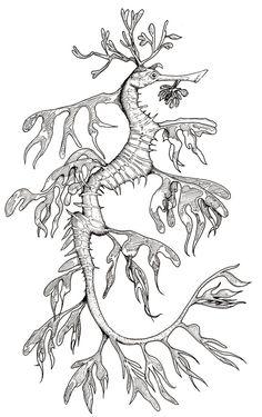 e0c08d59e3cac5c0beb09c87691e347e deer tattoo drawing designs?b=t 71 best seadragon images seahorses, horses, ocean creatures