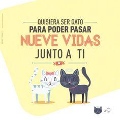 Quisiera ser gato para poder pasar nueve #vidas junto a ti #frases #amor