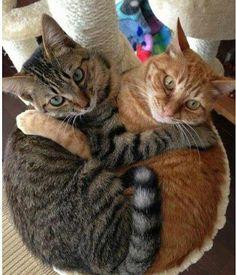 2 cats hugging