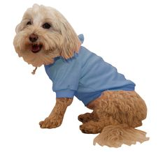 Push those chills away with stylish and highly functional dog sweaters from Essential Paw. Get great deals on dog apparel all year round.  For more details visit our website http://essentialpaw.com/