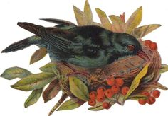 Victorian Cut Out Paper Scrap Colorful Bird in Nest c1880s