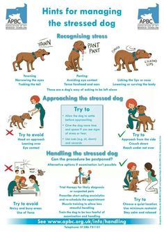 An Kety Pet Care. Get Your Dog Trained Today With These Simple Tips. Training your dog is important for an obedient relationship between you and your canine friend. During the training process, you and your dog will experien Pet Care Tips, Dog Care, Dog Information, Dog Training Tips, Potty Training, Training Schedule, Safety Training, Dog Behavior, Pet Health