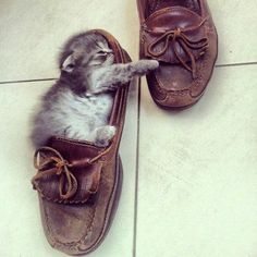 Willow used to do this but she'd dive head first into the shoe/boot.