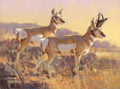 "High Desert Pronghorn, 9""x12"", Oil on Linen - Pronghorn antelope painting by James Morgan"