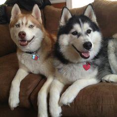 My beautiful huskies!