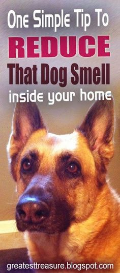 Reduce That Dog Smell Inside Your Home