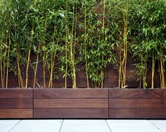 If you are looking for screening, our bamboo trees in a trough are a stylish option.