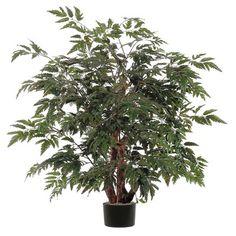 Vickerman Co. Ming Aralia Bush Tree in Pot