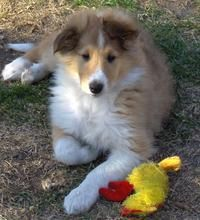 Harley the Border Collie Mix | Puppies | Daily Puppy
