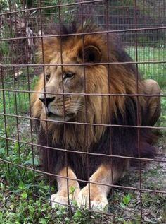 Big Cat Rescue: Tampa, FL