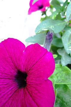 Create Every Day: I love Flowers  http://createeverydayblog.blogspot.co.il/