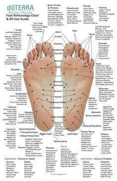 Essential Oil Chart, Massage Dos, Foot Massage, Facial Massage, Foot Chart, Aromatherapy Oils, Healing Oils, Healing Herbs, Doterra Essential Oils