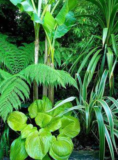 Ferns, arundo donax, bamboo Small Tropical Gardens, Tropical Plants, Tropical Flowers, Jungle Gardens, Hillside Garden, Hardy Plants, Garden Theme, Ferns, Evergreen