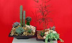 Centro de mesa con plantas crasas