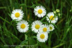 Florals & Botanicals - LADYBUG COTTAGE PHOTOGRAPHY #11