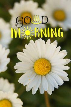 Good Day, Good Morning, Free Happy Birthday Cards, Mornings, Greeting Cards, Messages, Good Morning Wishes, Buen Dia, Buen Dia