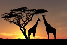 Wallpaper giraffe, silhouette, tree, sunset, africa, savannah