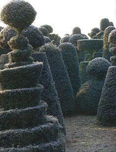Topiary in winter - Yann Monel