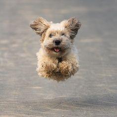 Imagine cute, dog, and animal