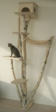 Cat tree, Repurposed birch tree