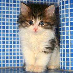 verdens søteste kattunge - Google-søk